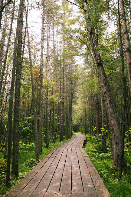 Boardwalk amidst trees in woodland