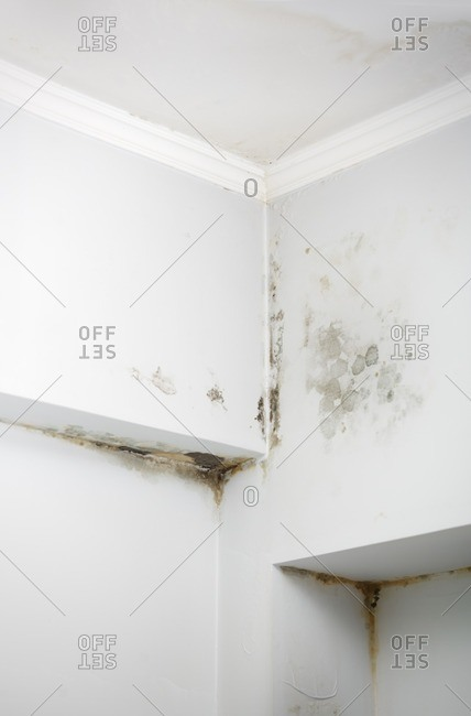Wet walls damaged by mold