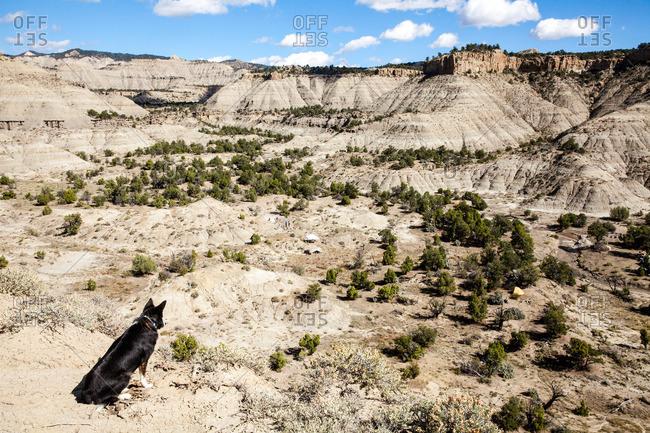 Dog sitting on a high ridge overlooking camp in Utah's Kaiparowits Plateau
