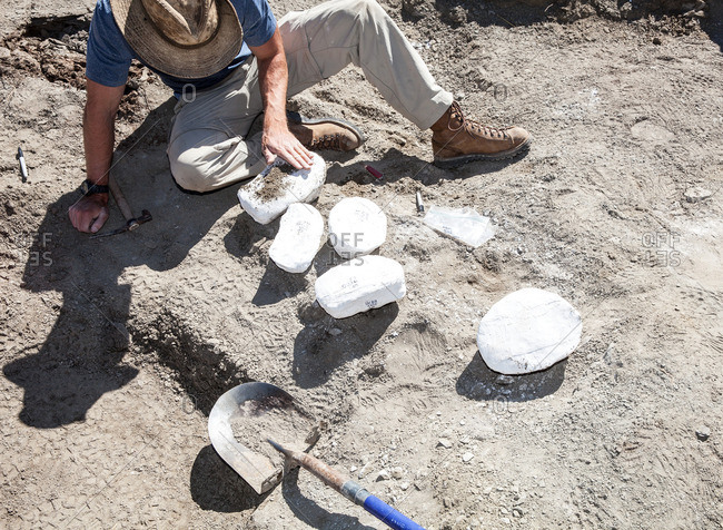 Paleontologist preparing plaster jackets for a fossils recovered in the field in Utah's Kaiparowits Plateau