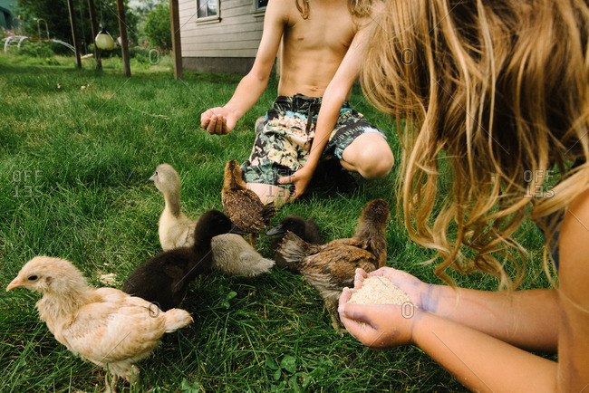 Siblings hand feeding young ducklings and chicks in his backyard
