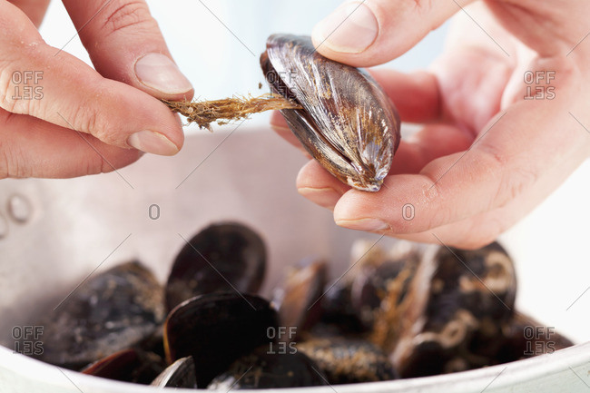 Removing beards from mussels