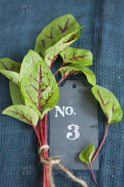 Red-veined dock and a number tag