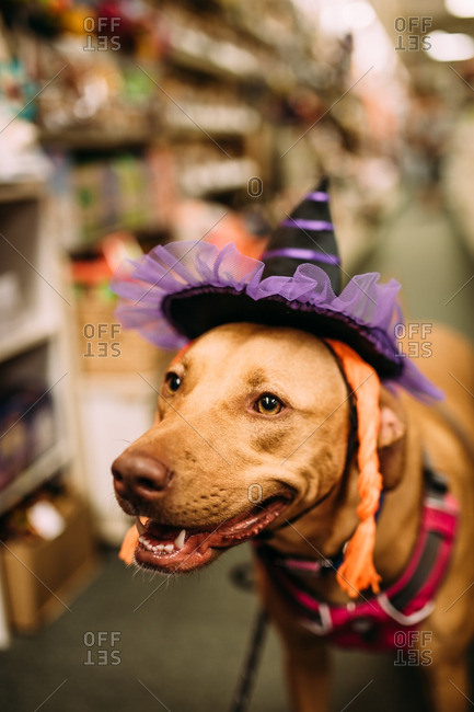Dog wearing silly hat
