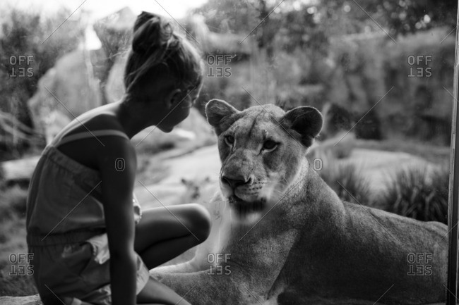 Girl by lion in zoo