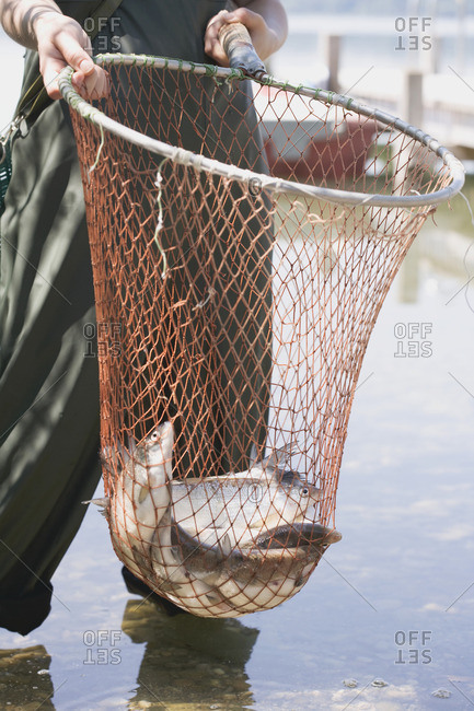 Female angler holding freshly caught fish in a net