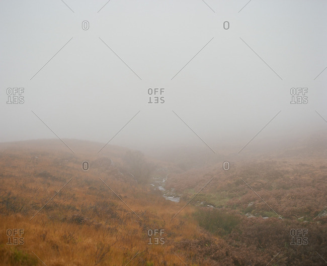 Creek and meadow on a foggy day