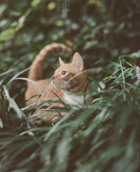 Cat looking away while standing in a field of grass