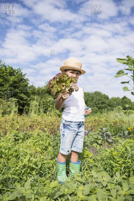 Small boy holding bunch of lettuce in Community Garden, Bavaria, Germany