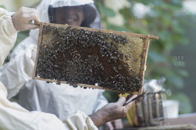 Beekeepers looking at honeycomb, Freiburg im Breisgau, Baden-Wurttemberg, Germany