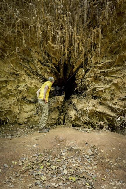 Hiker Peaking Inside The Center Of A Massive Fallen Tree Along The Oakridge Trail