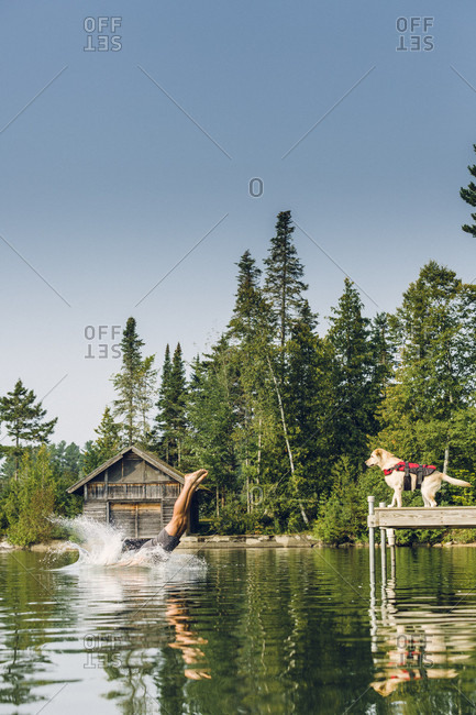 Man Dives Into The Water While His Dog Looks From The Edge Of A Dock