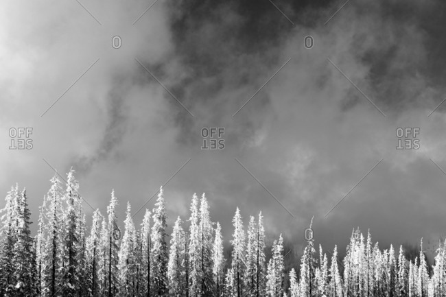 Scenic View Of Snowy Pine Trees And Cloudy Landscape