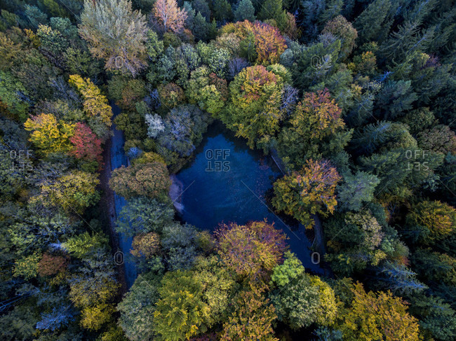 Aerial View Of The Forest During Autumn In Shades Of Red And Gold Surrounding A Small Lake