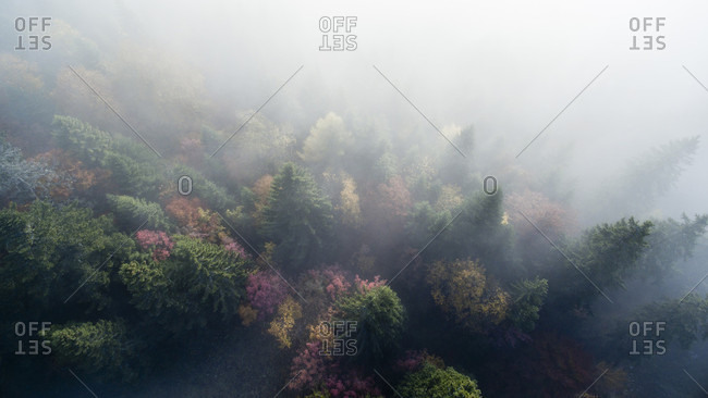 Aerial View Of Treetops In The Fall Poking Through A Thin Layer Of Fog