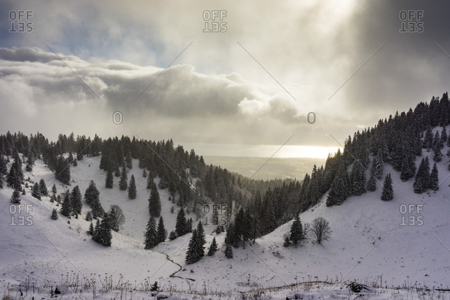 A Snowy Winters Landscape With Fir Trees And Lake Geneva In The Jura Mountains