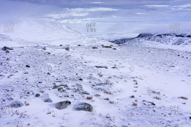 A Snowy Arctic Winter Landscape At Dovrefjell Sunndalsfjella National Park, Norway