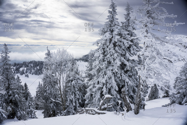 View Of Trees Covered With Snow In Switzerland