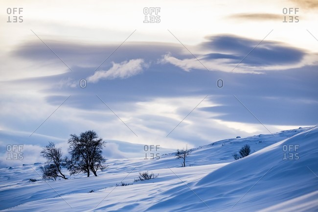 Scenic View Of Norwegian Winter Landscape In Dovrefjell, Norway