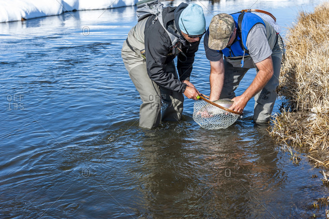 Two Fishermen Netting A Rainbow Fish On The Upper Owens River