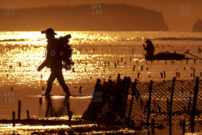 Silhouette Of Person Walking In Seaweed Farm In Sumbawa, Indonesia