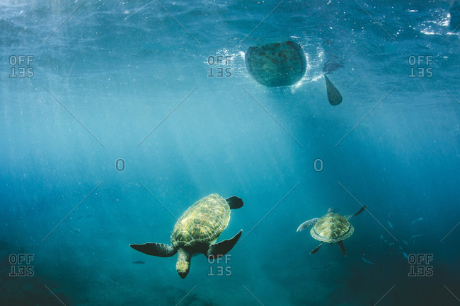 Underwater View Of Stand Up Paddle Boarding With Turtle Swimming
