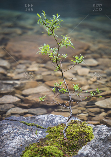Close-up Of Tree Growing On Rock