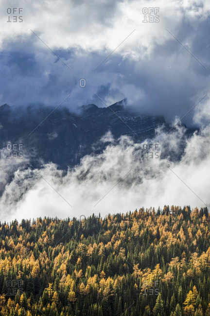 Clouds Rising Over Golden Larches In Mount Assiniboine Provincial Park