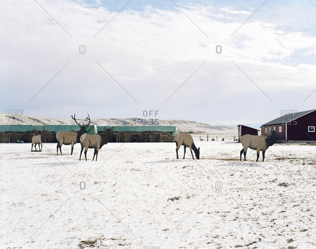 Moose hunting targets