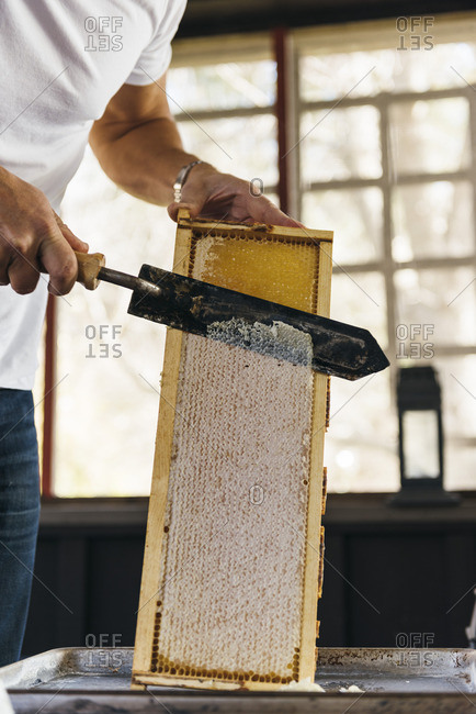 Person cutting honeycomb off hive frame