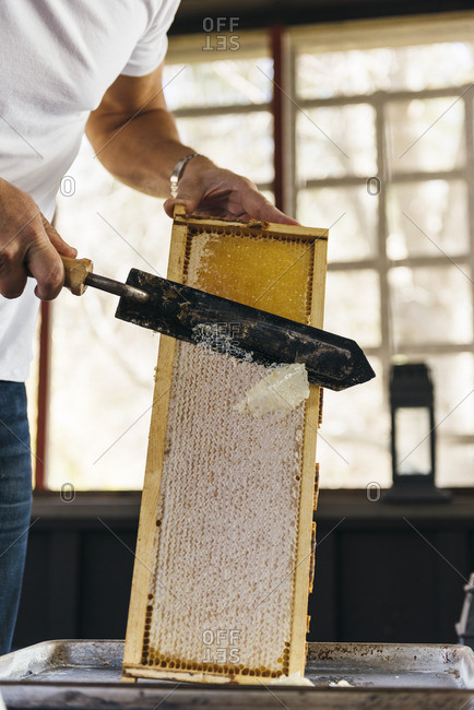 Person slicing honeycomb off frame