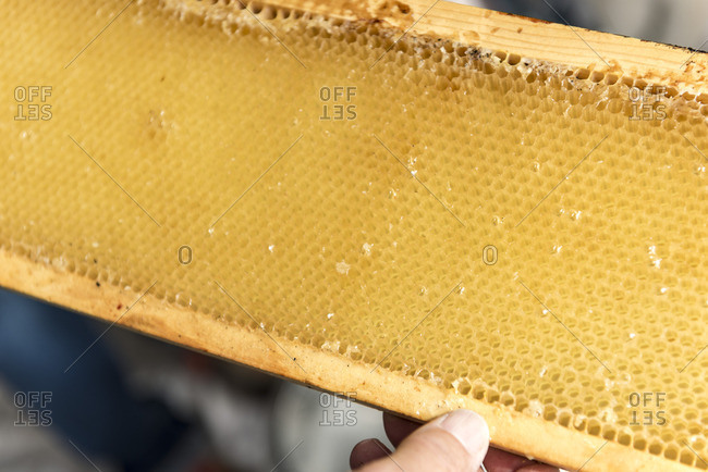 Fresh honey in comb on frame of beehive