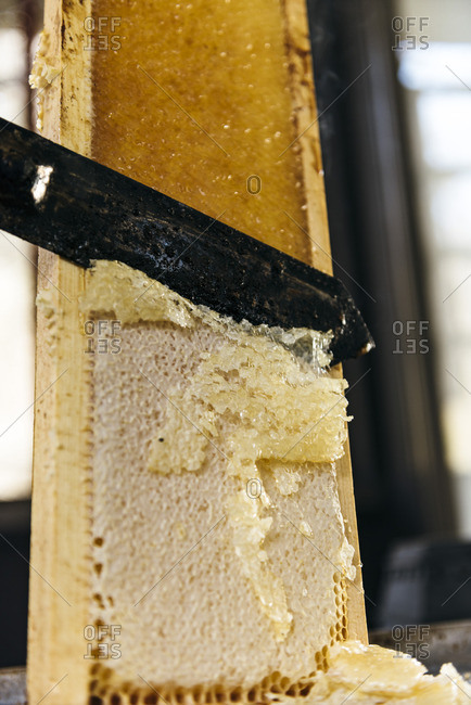 Knife cutting wax off honeycomb to harvest honey
