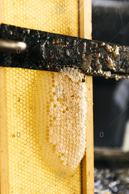 Cutting wax away from the honeycomb frame while harvesting honey