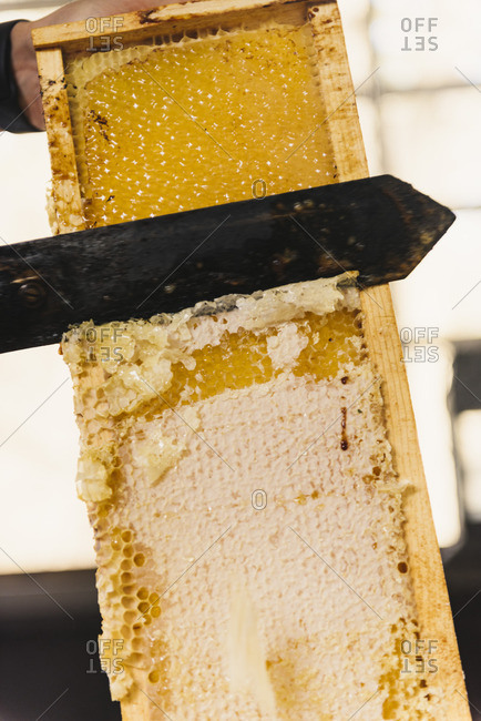 Cutting the wax caps off honeycomb to reveal the honey inside