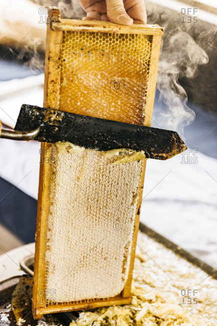 Steaming knife melts through honeycomb during the harvesting process