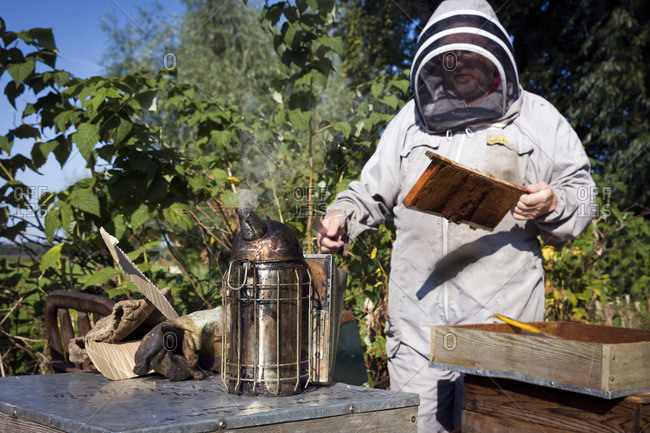 Beekeeper with frame of honeycomb from hive