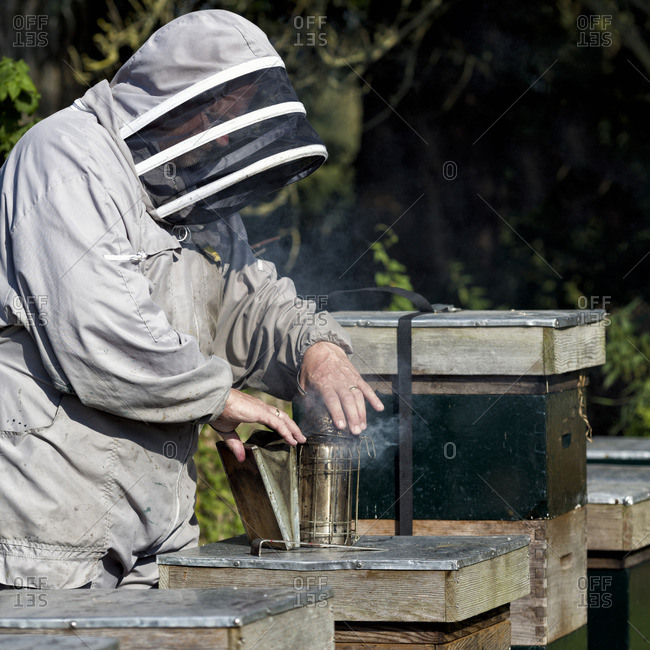 Beekeeper using smoker while working with his bee hive