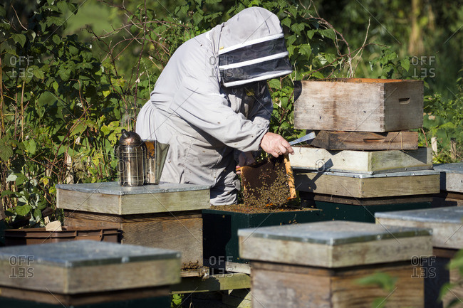 Beekeeper at work among his hive boxes