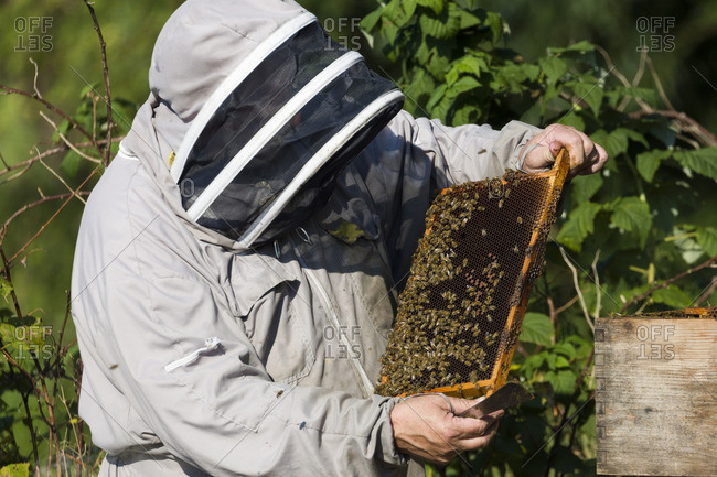Beekeeper checking frame for honeycomb