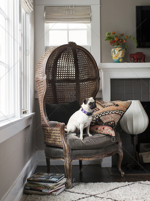 April 24, 2015: Dog in rattan hood chair