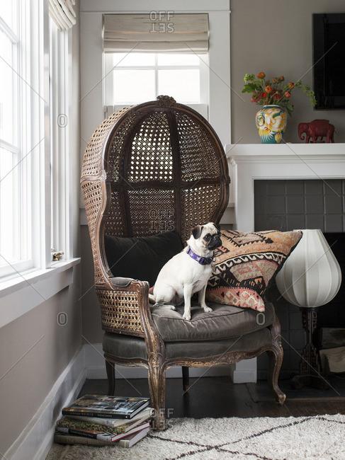 April 24, 2015: Dog in rattan hood chair