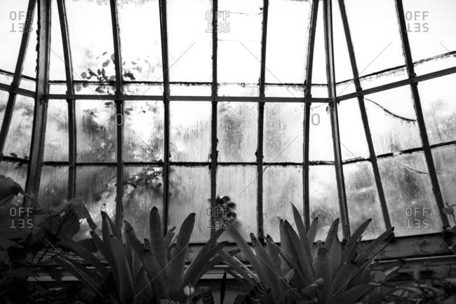 Plants in a conservatory