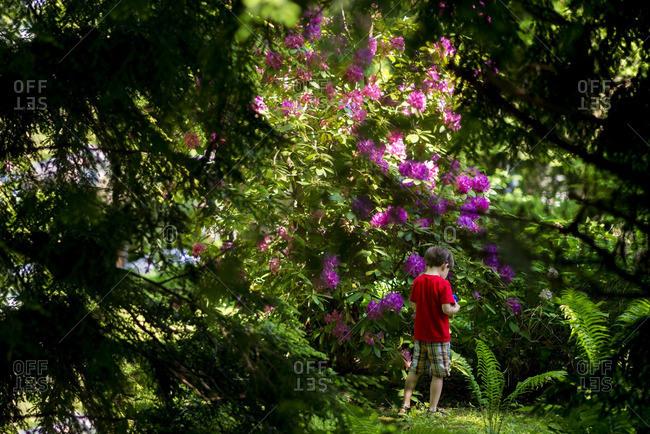 Boy by floral bush in yard