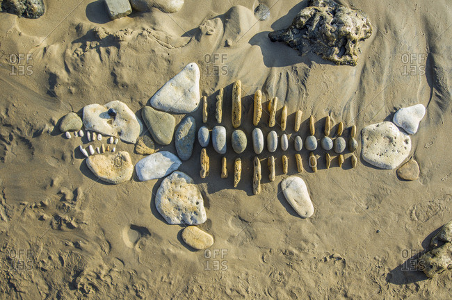 Fish skeleton made from pebbles