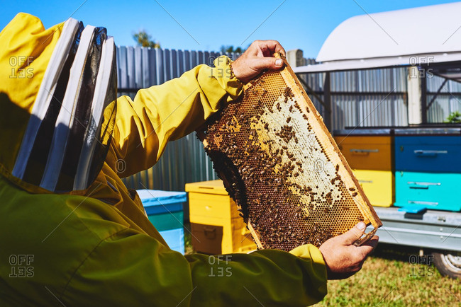 Beekeeper in protective suit holding a honeycomb