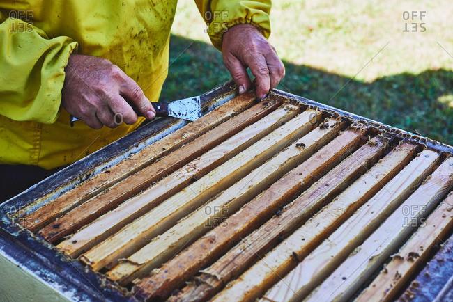 Beekeeper scraping beeswax off beehive frame