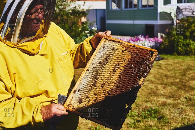 Apiarist holding honeycomb with fresh honey