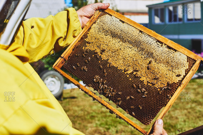 Close-up of honeycomb in hands of beekeeper