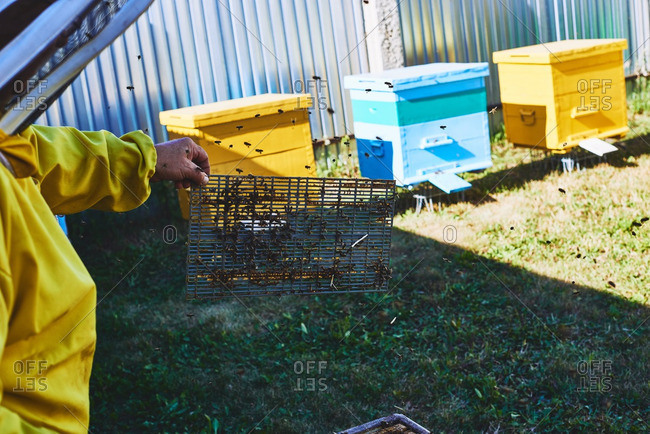 Beekeeper holding beehive grill with bees